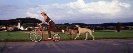 Kickbike - dogs