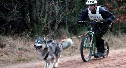 Kickbike - mushing